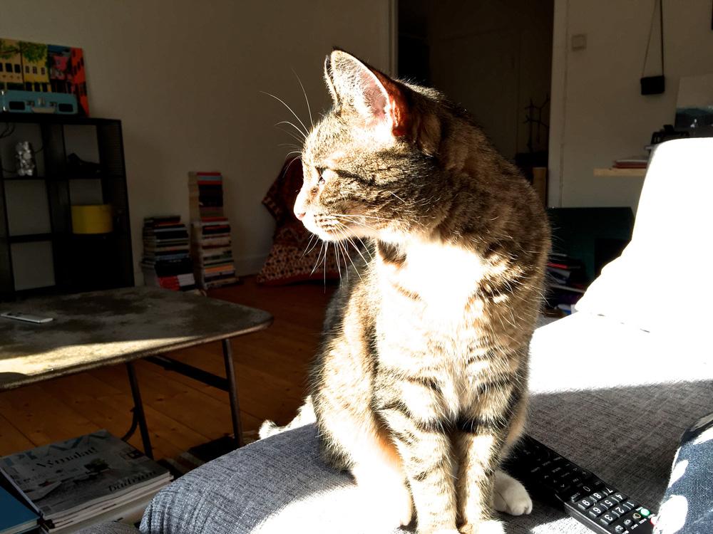 3-sunshine-cat-zola
