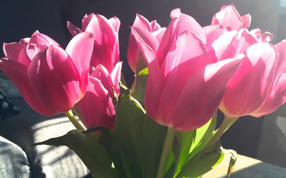 tulips-header