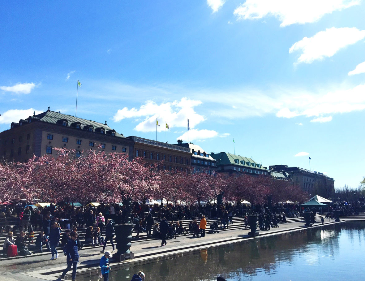 kungstradgarden-stockholm-cherry-trees