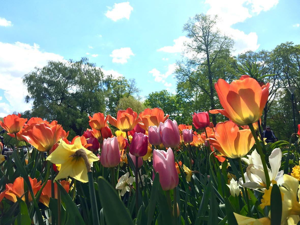 flowers-sky-uppsala