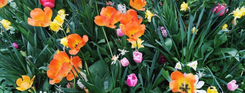 flowers-uppsala