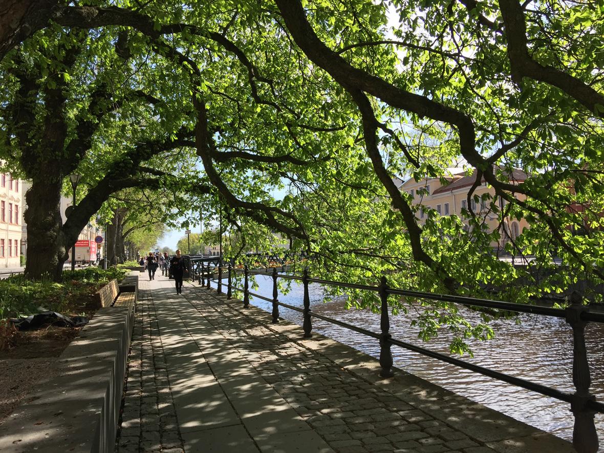 tree-river-uppsala