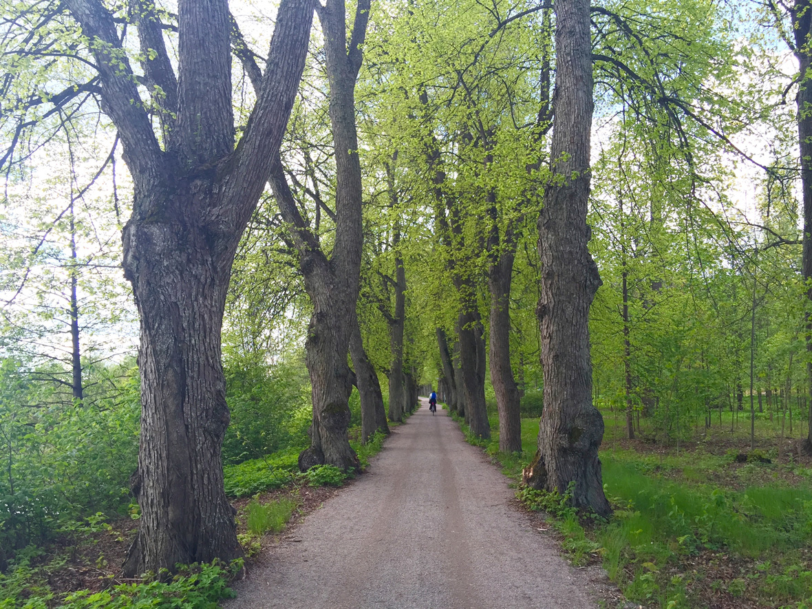 trees-pathway-uppsala