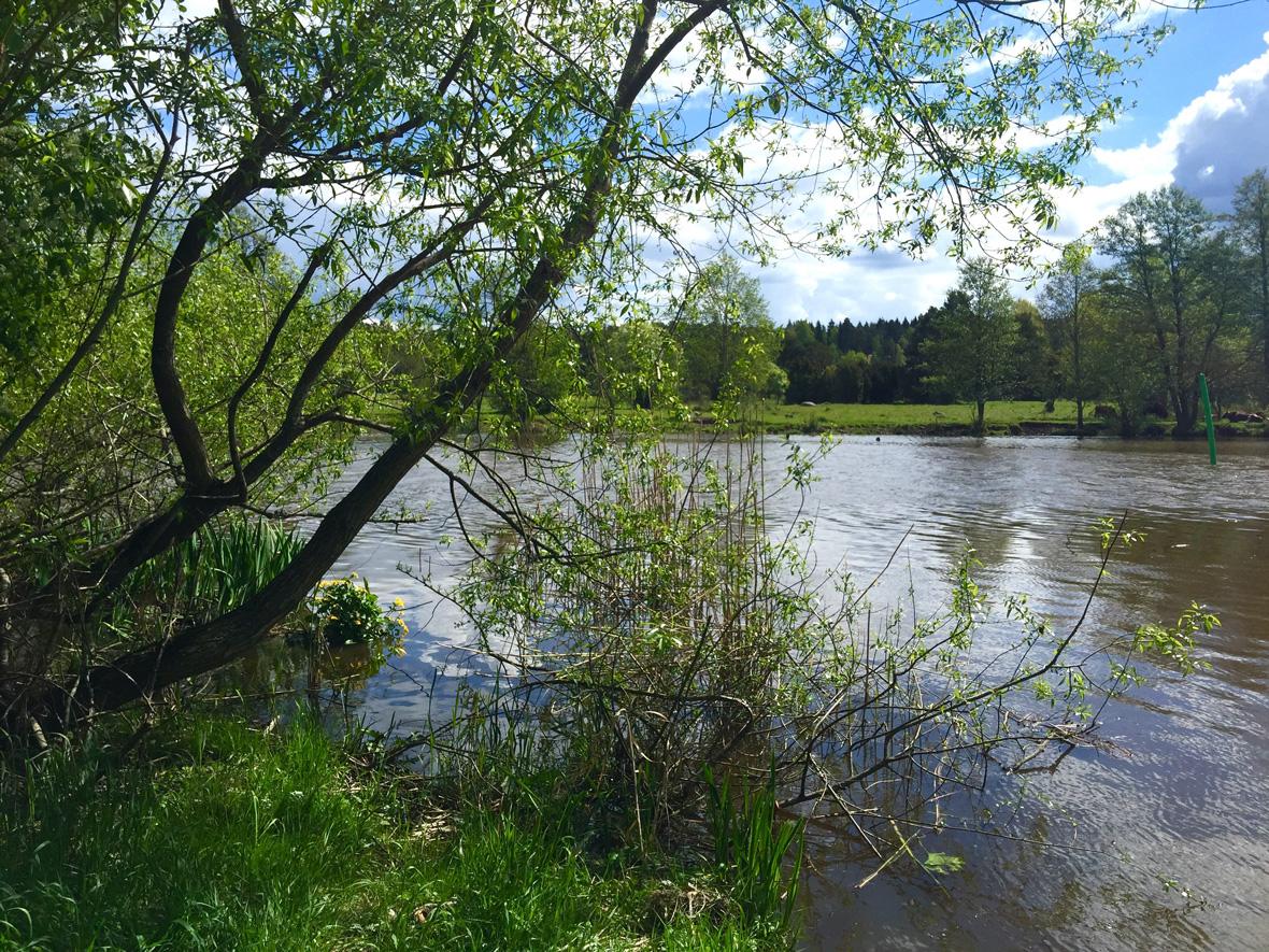trees-river-uppsala