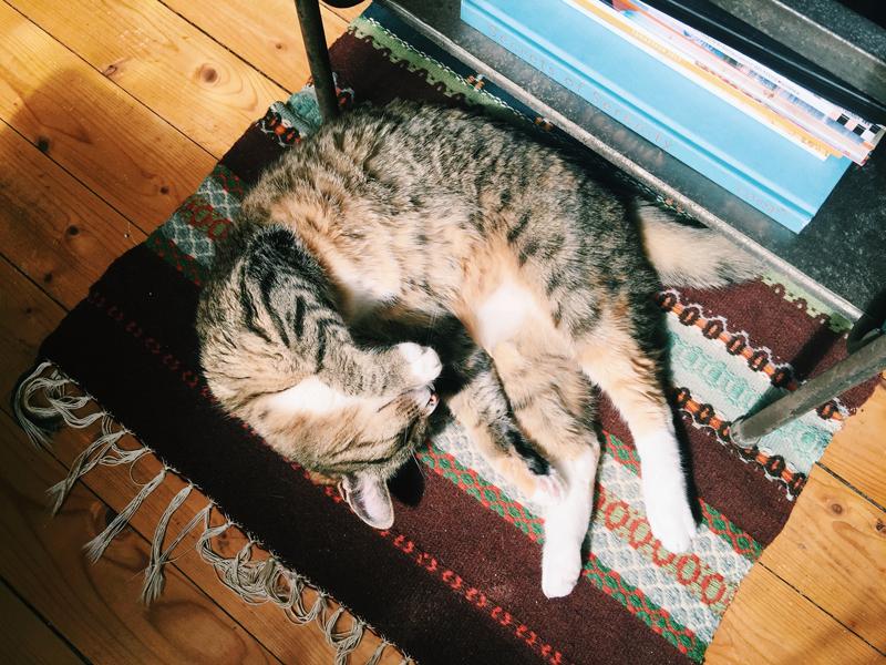 zola-sleeping-sunshine