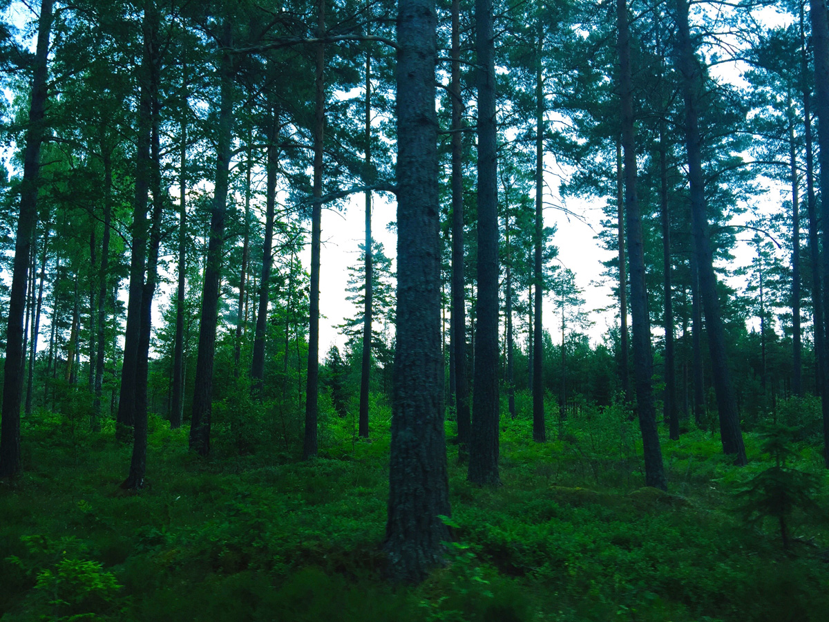 dark-forest-trees-skeppsgarden