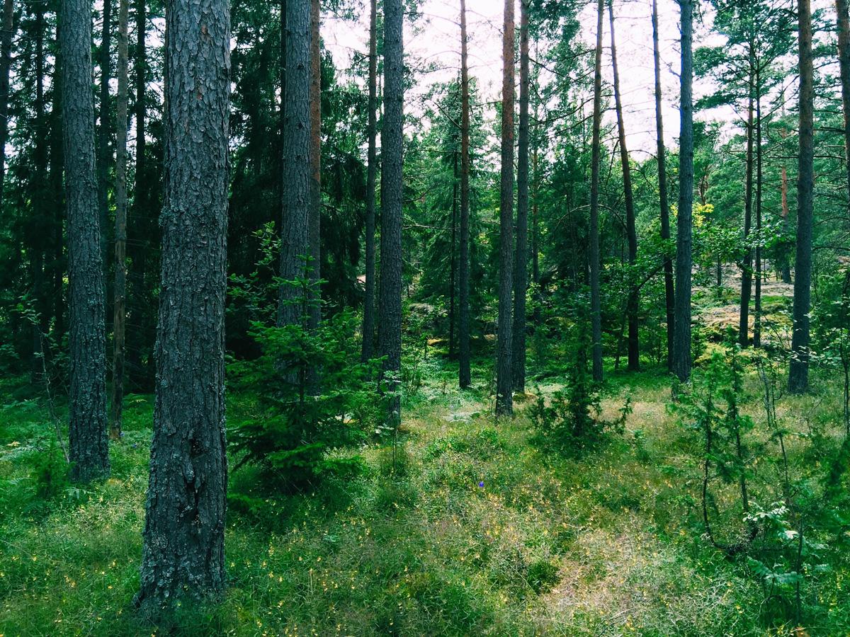 trees-flowers-skeppsgarden