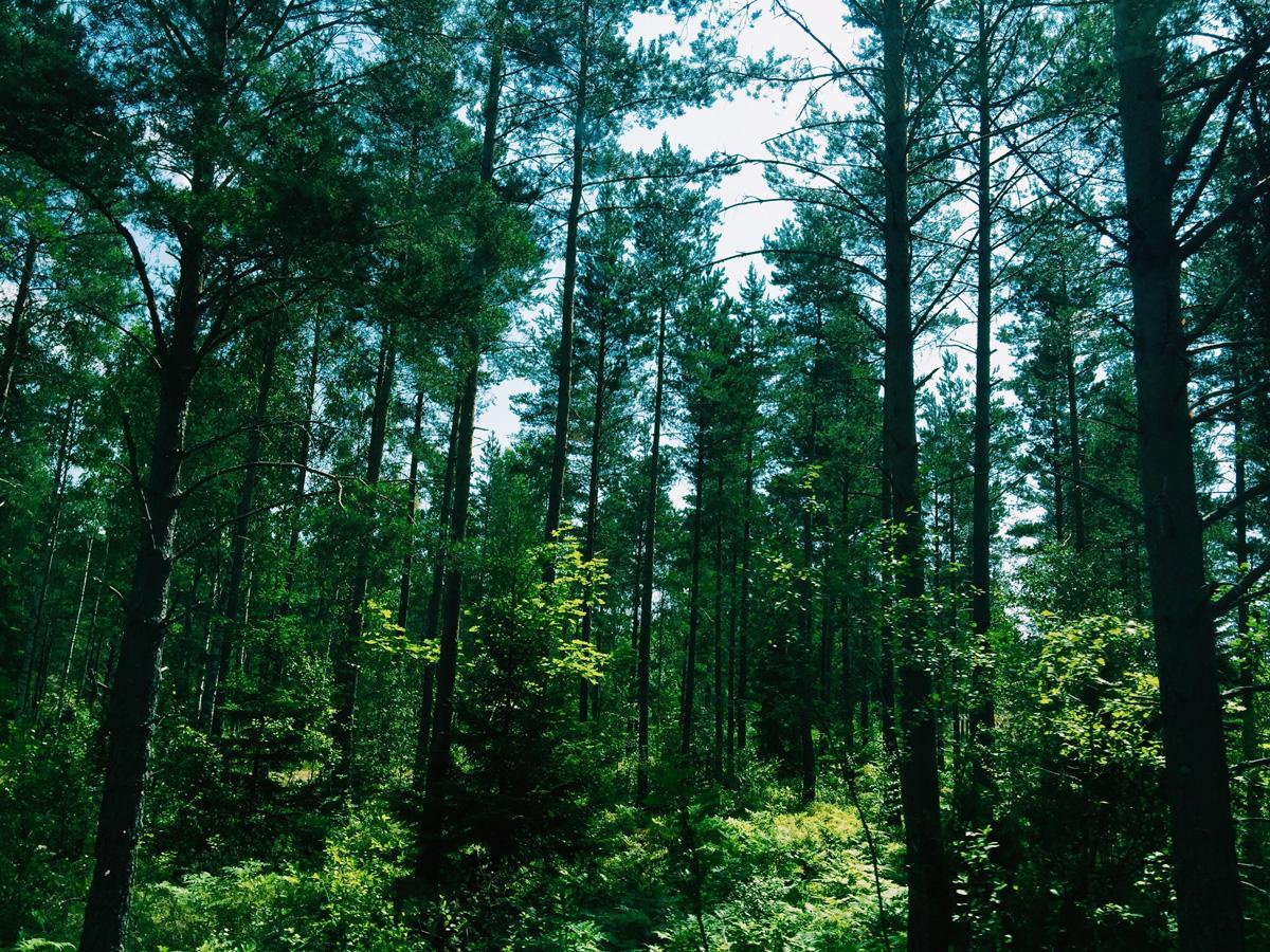 trees-skeppsgarden