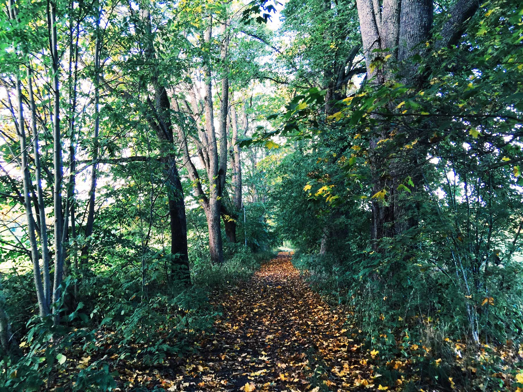 autumn-path-leaves