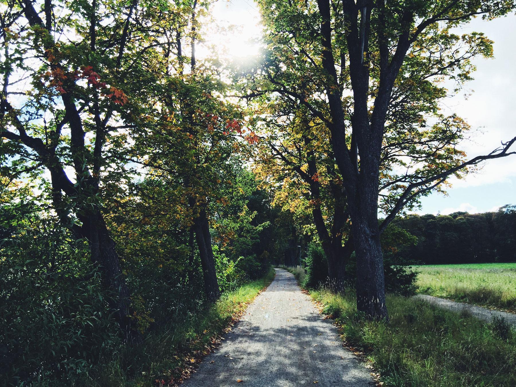 bike-trail-sunshine-autumn