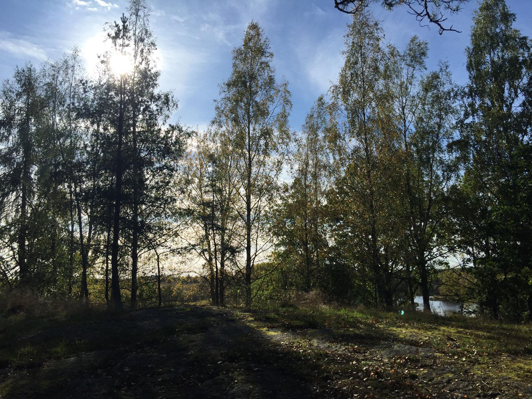 sunshine-woods-surahammar-life-coach