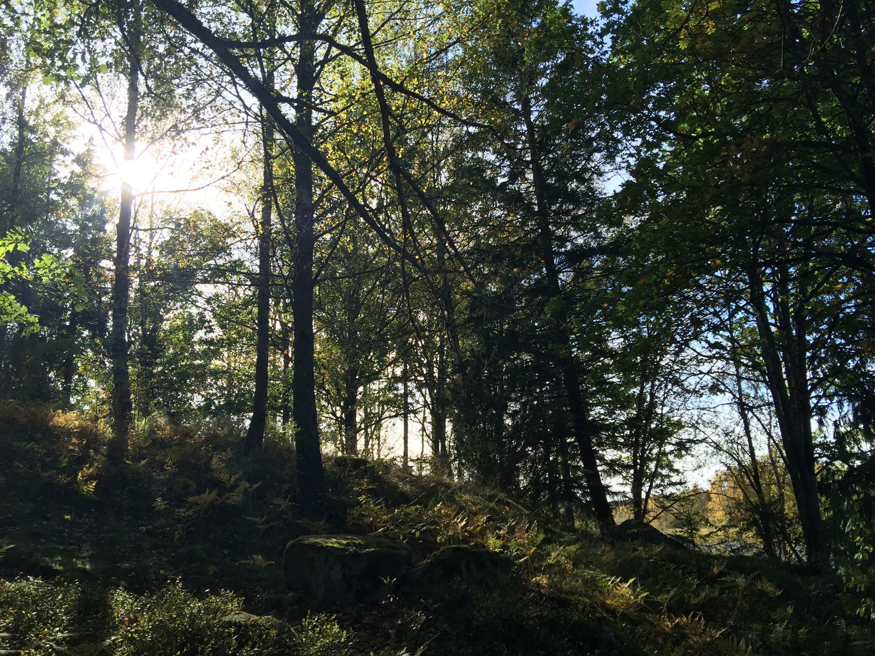 woods-surahammar-life-coach