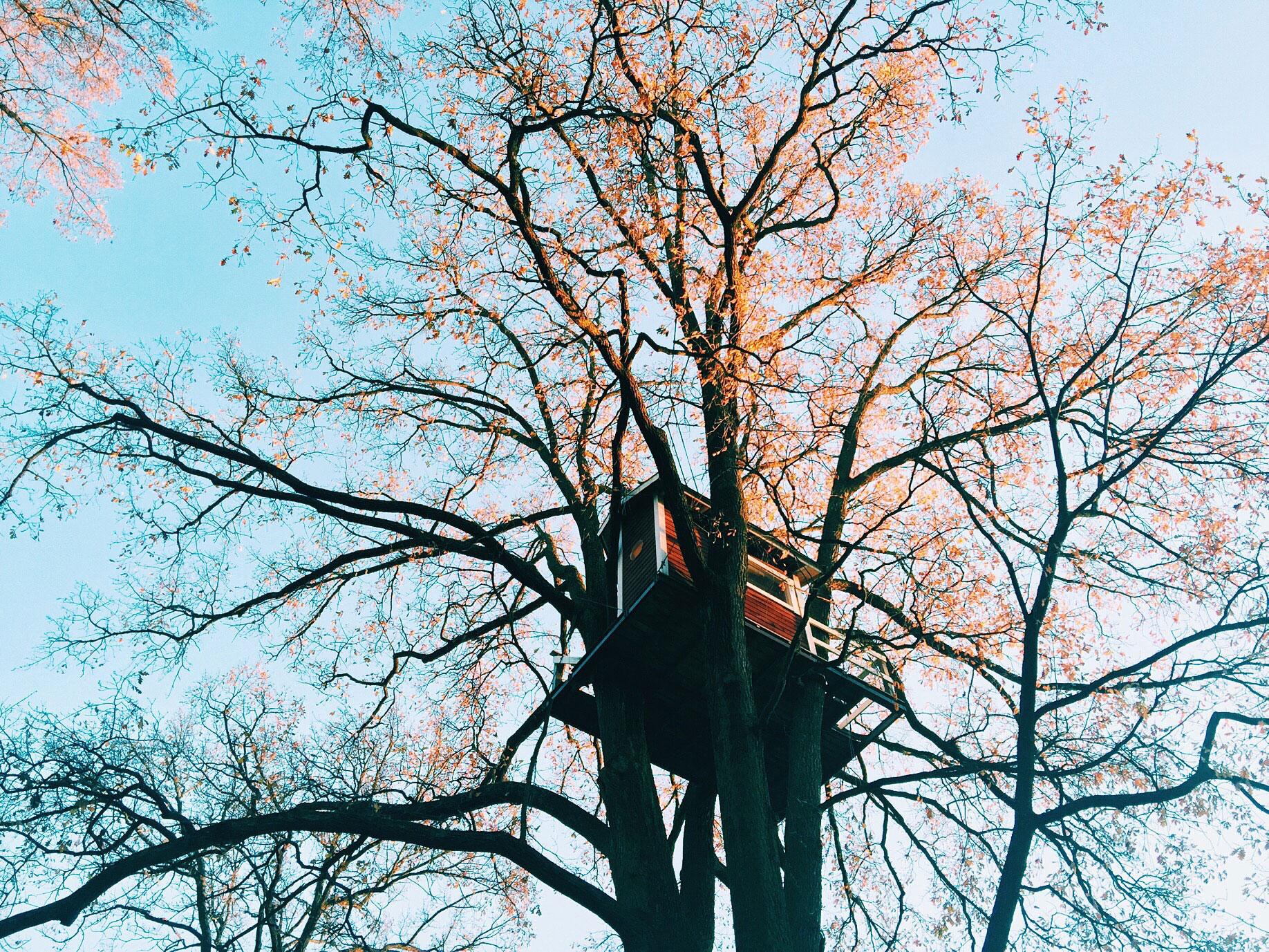 treehouse-autumn