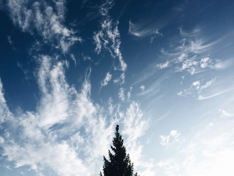 tree sky uppsala