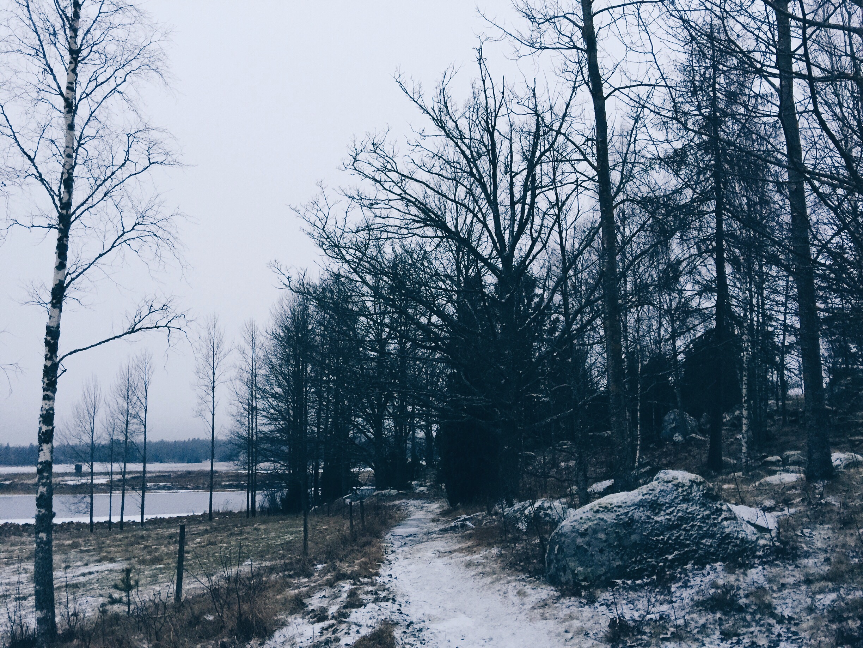 winter path surahammar