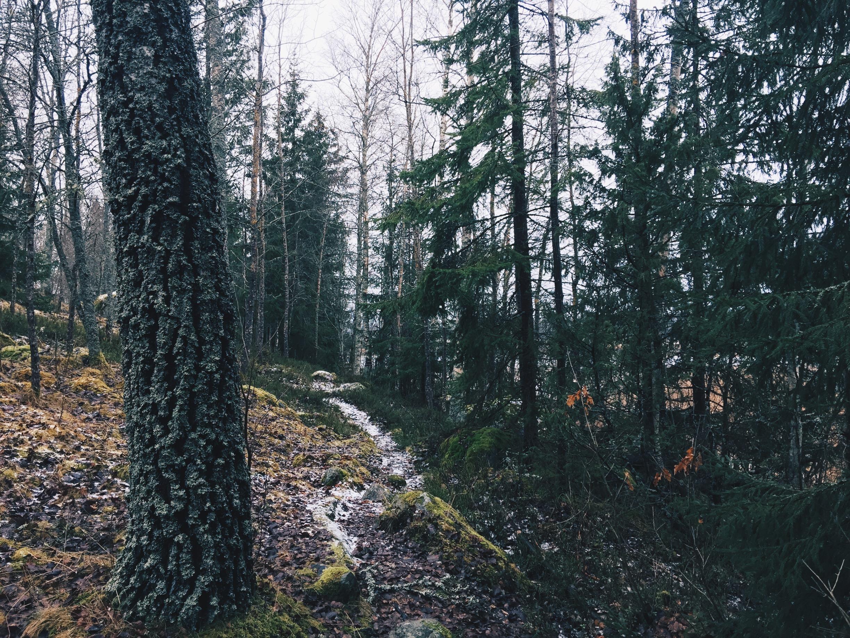 life coach surahammar woods forest