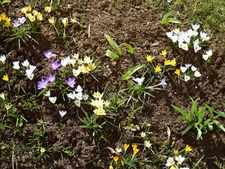 flowers wild