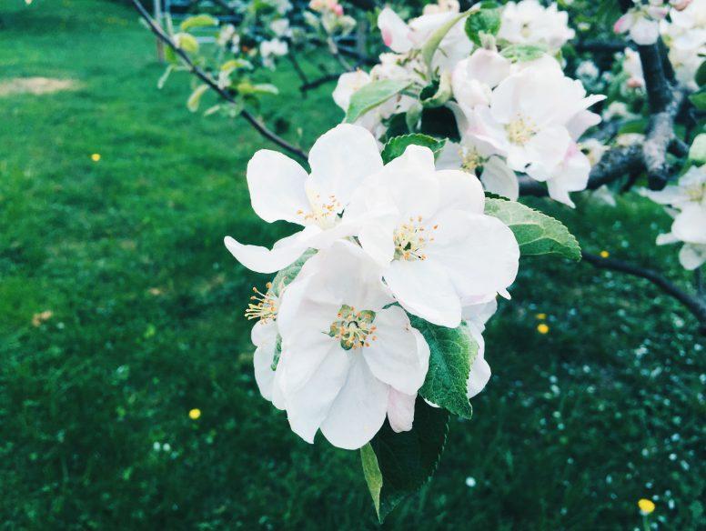 flower bloom tree
