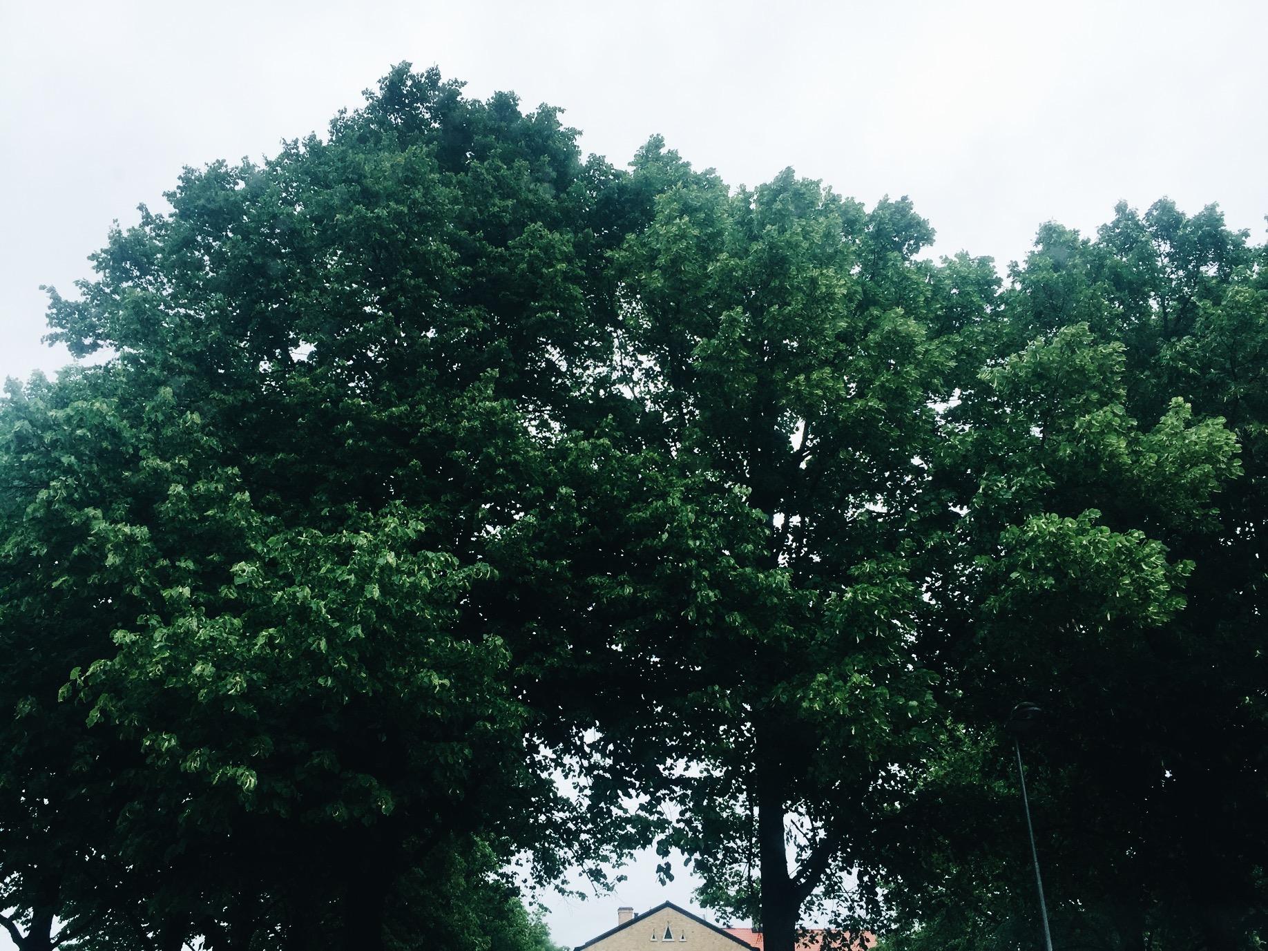 tree rain