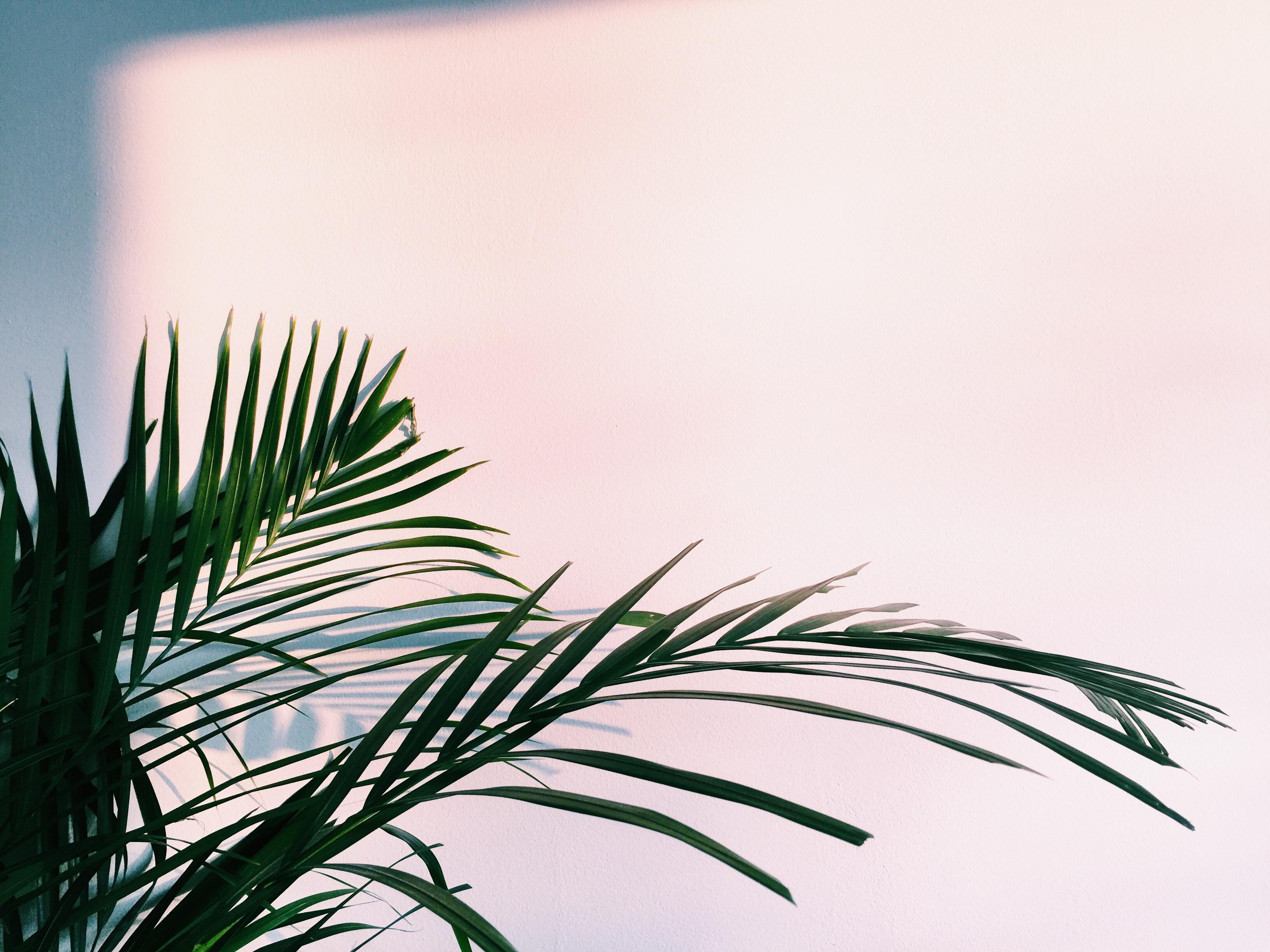 palm tree sunset home