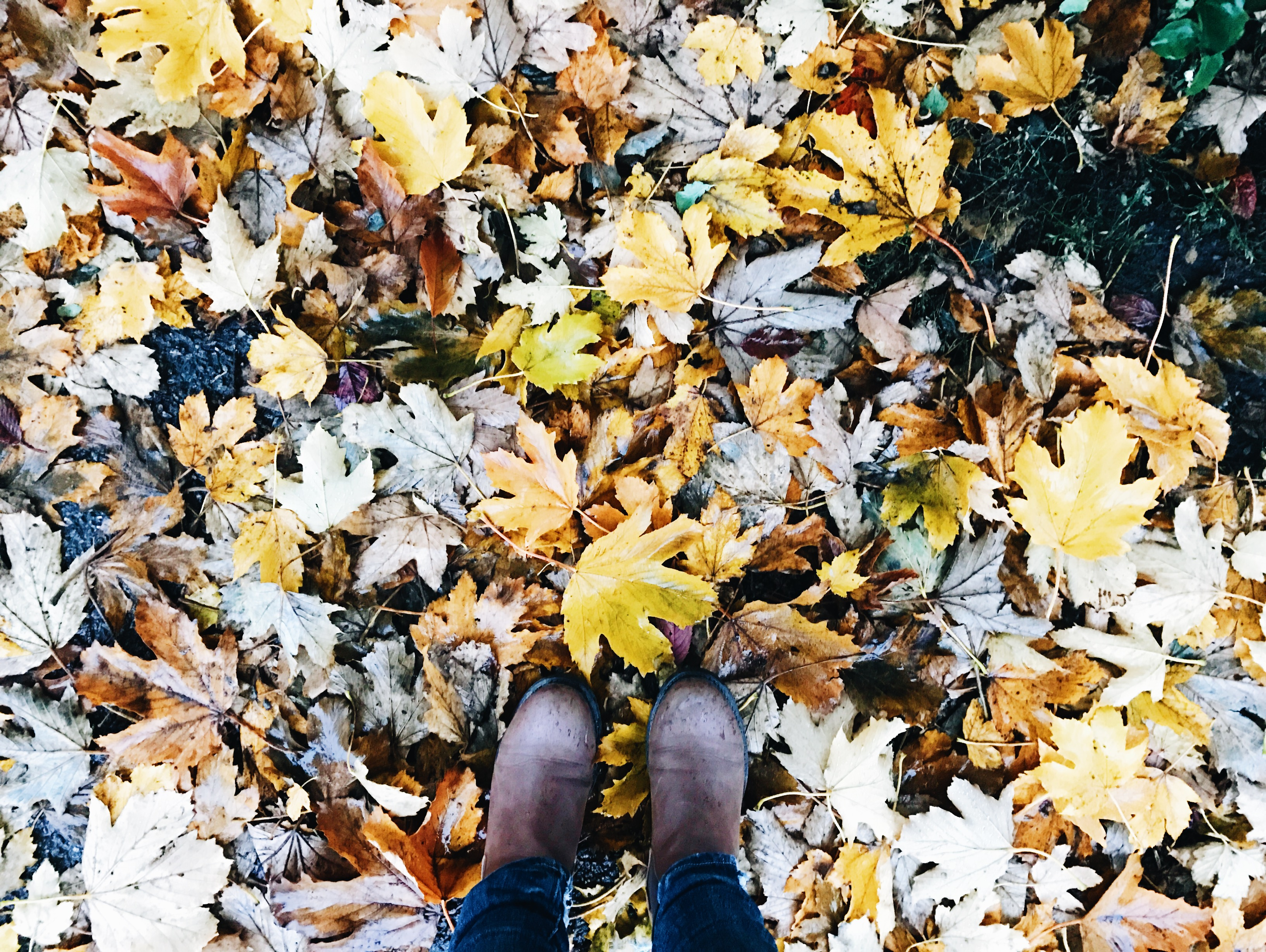 me feet leaves autumn