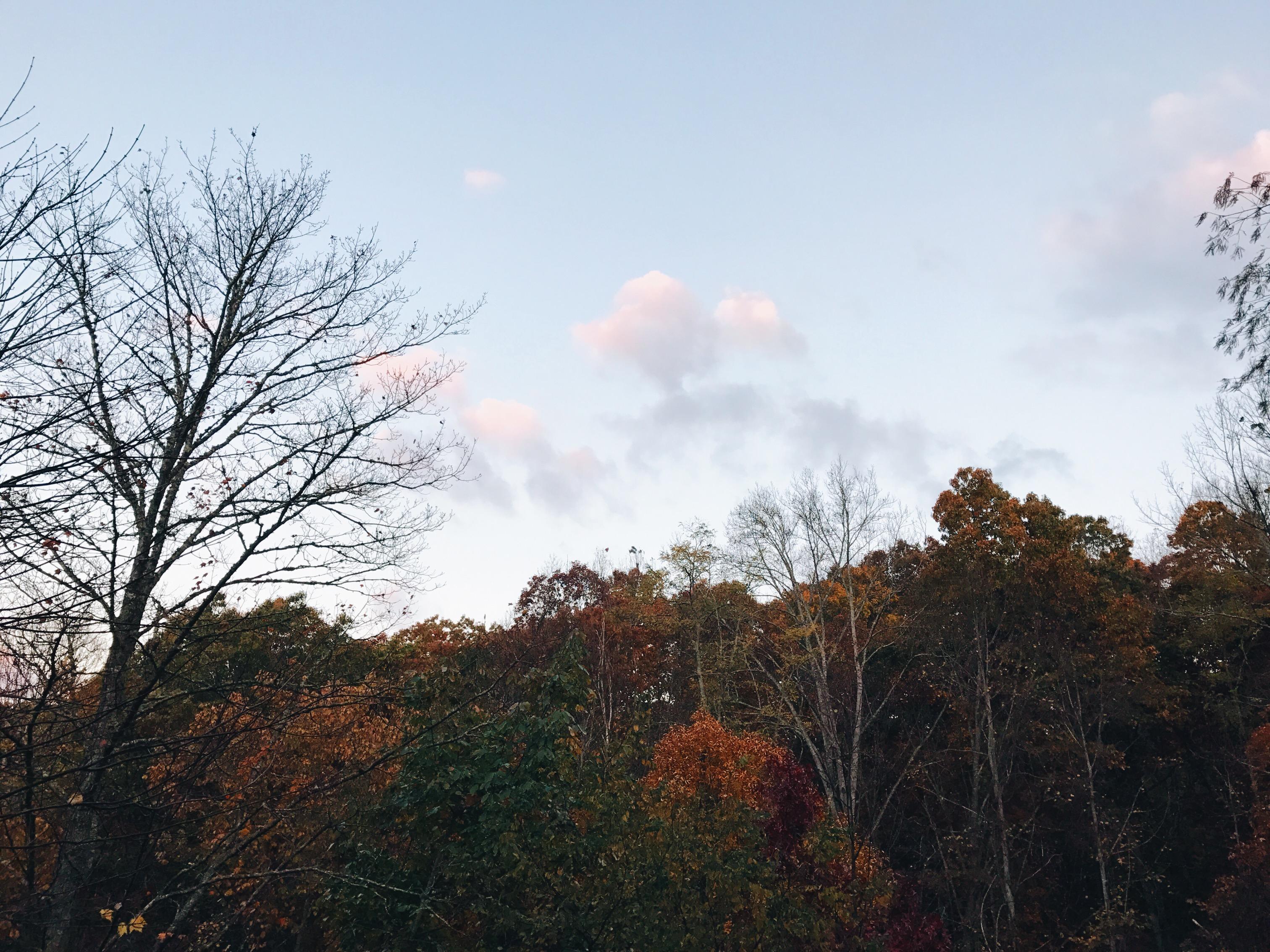 lake junaluska  trees