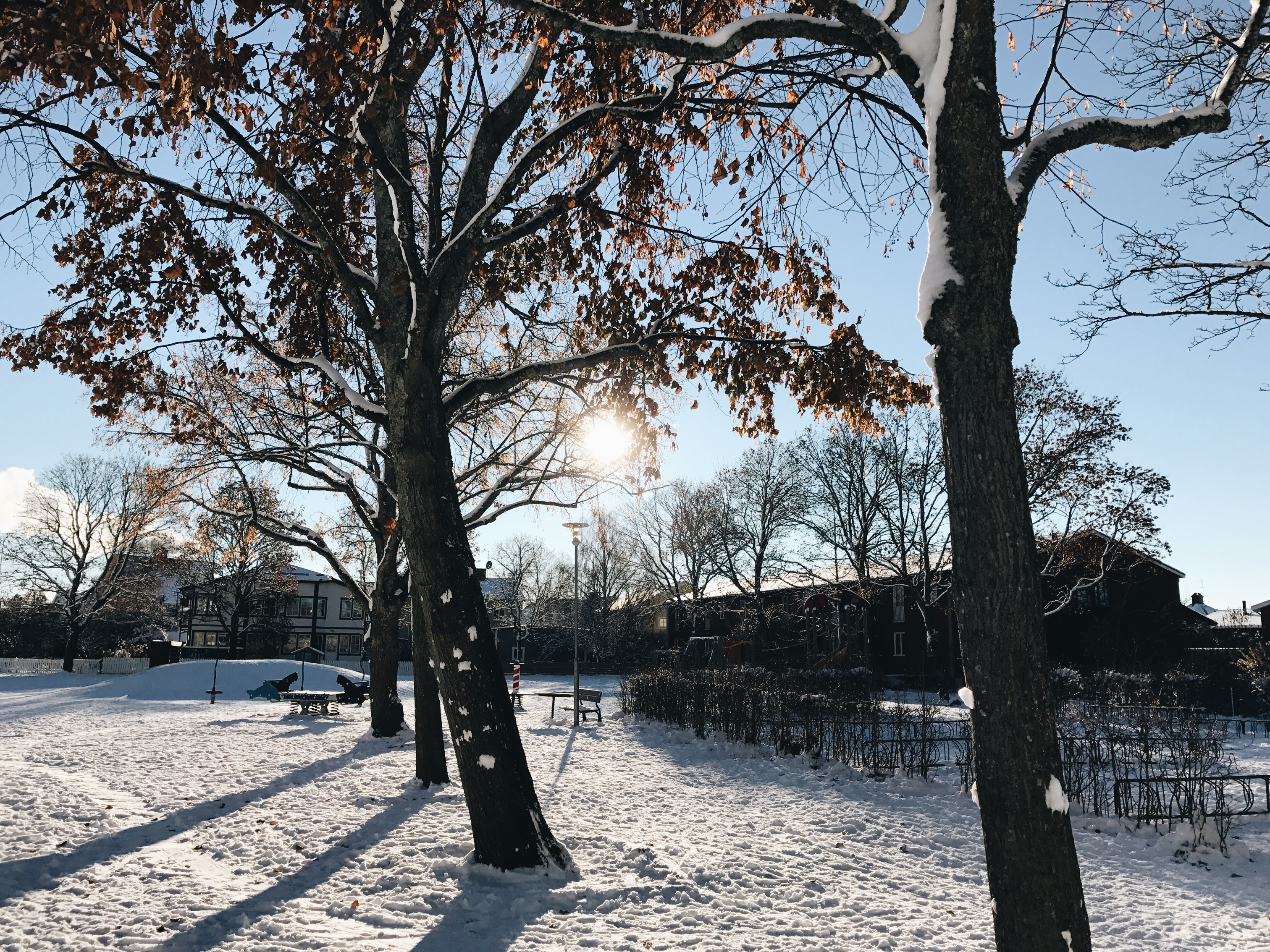 winter home snow tree