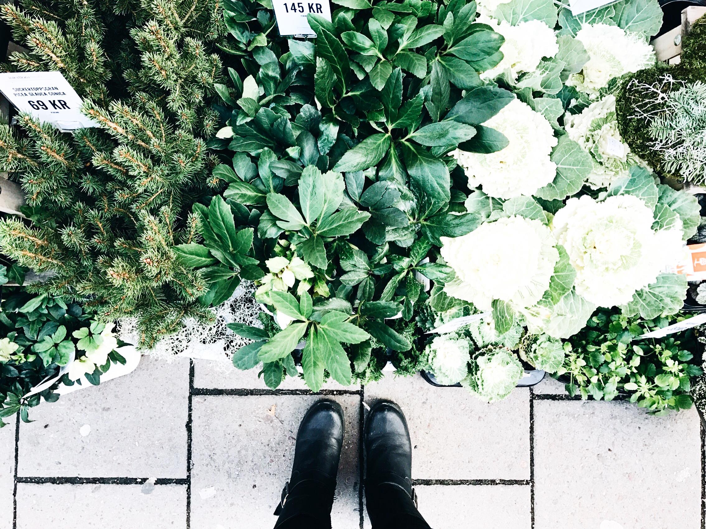 plants green me feet