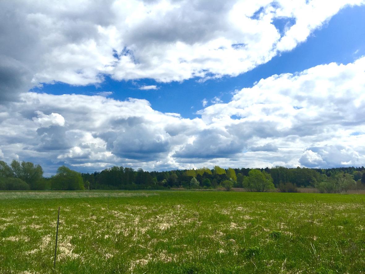 spring-green-field-uppsala