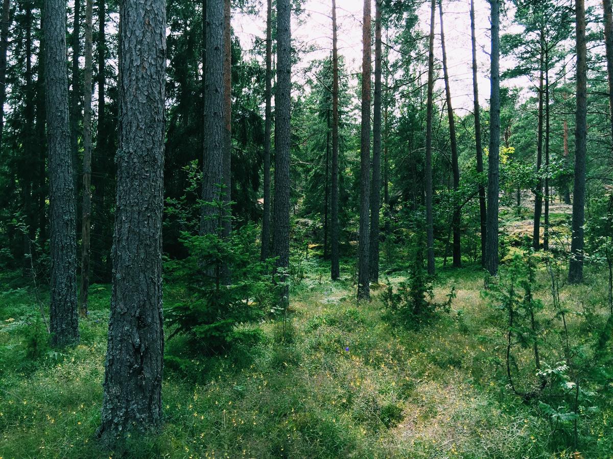 skeppsgarden-forest-woods