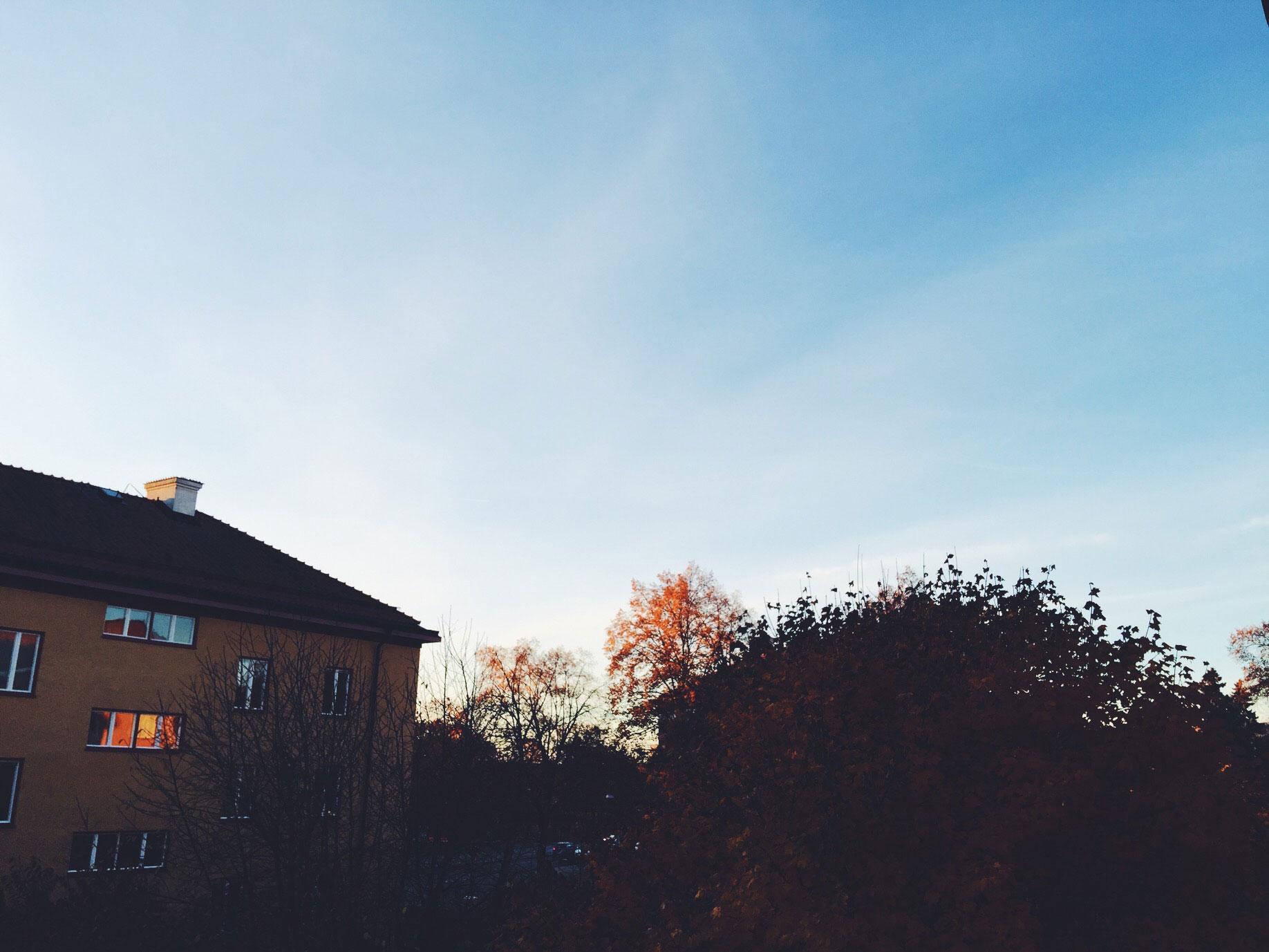 window-autumn-tree