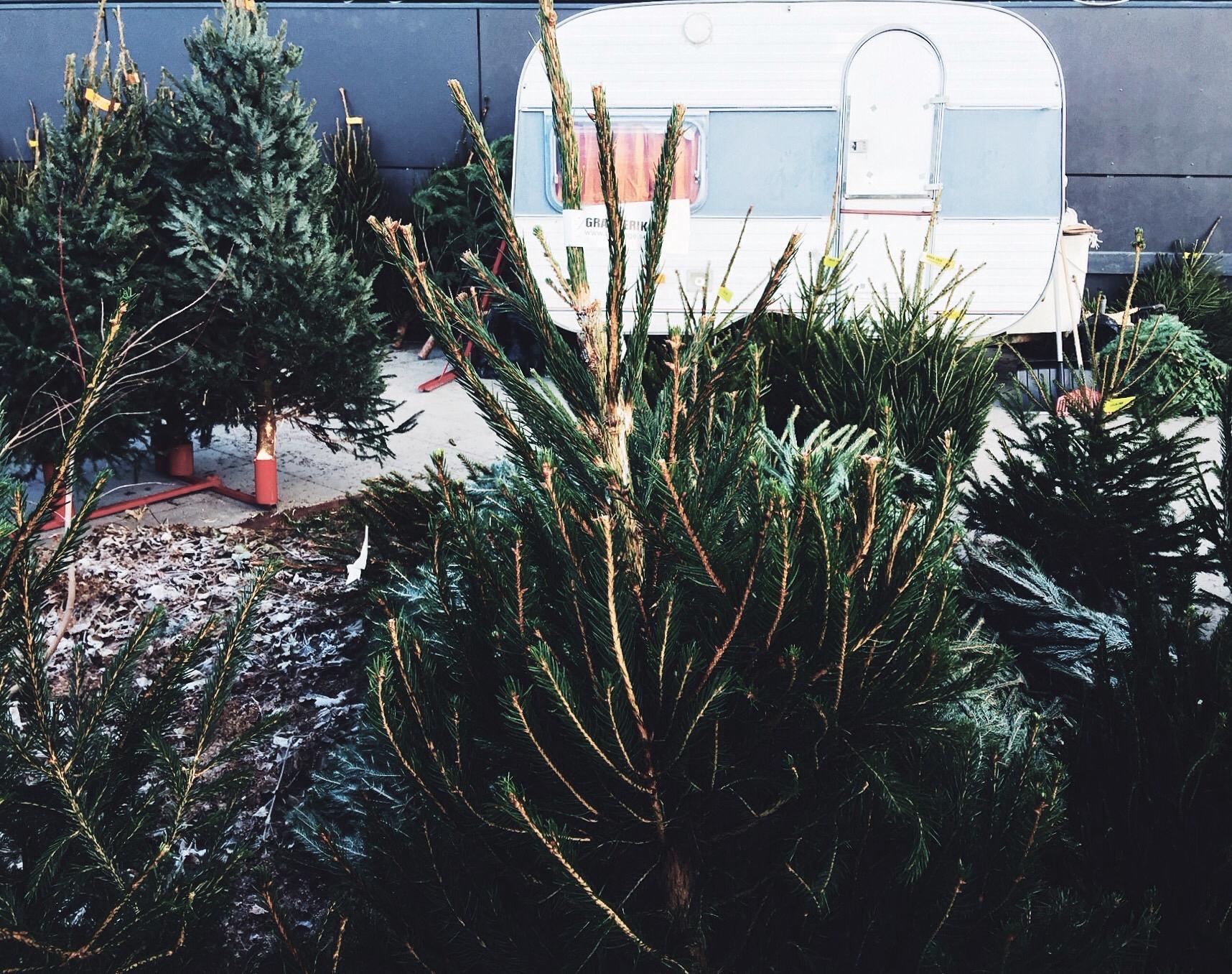 christmas tree selling work uppsala