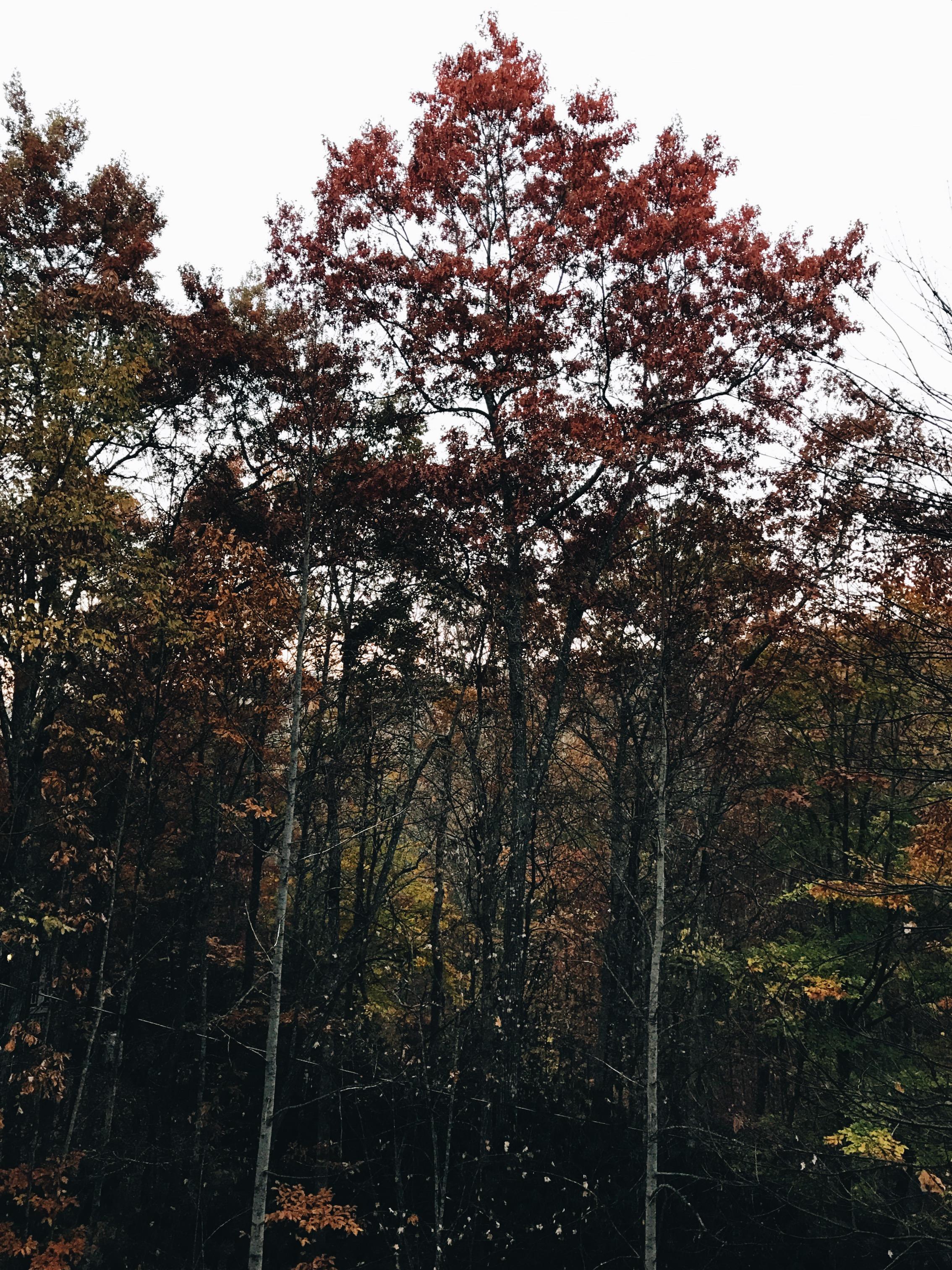 lake junaluska sunrise trees