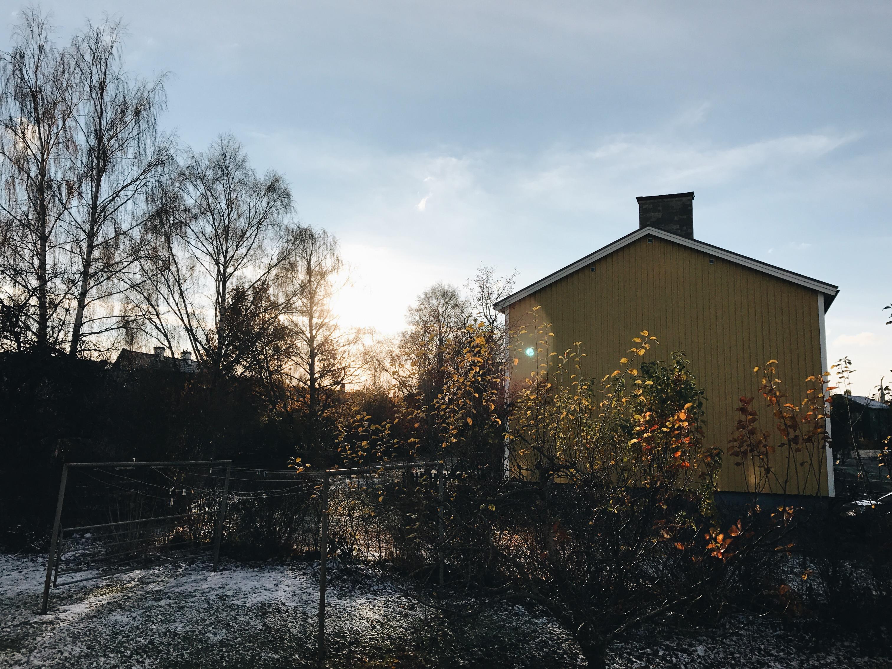 home backyard winter